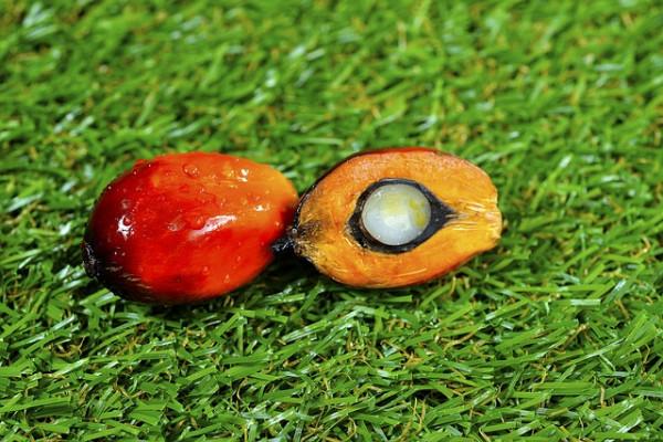 Olej palmowy wproduktach żywnościowych – polecany czyniewskazany?