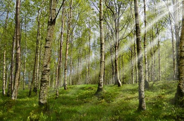 Alergia napyłki drzew iżywność – reakcje krzyżowe