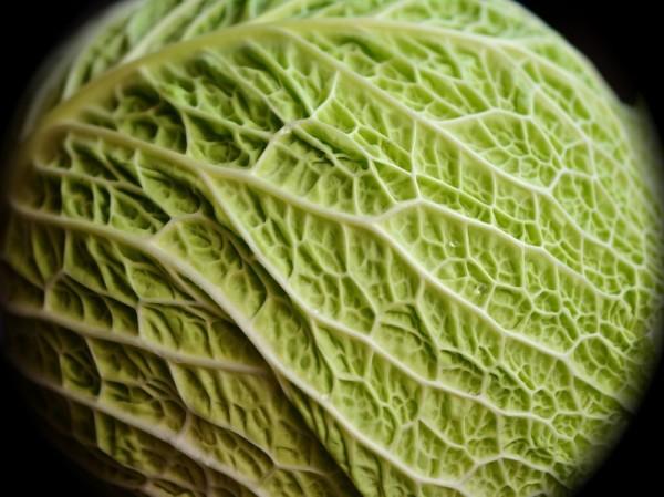 Warzywa kapustne isulforafan przeciwko rakowi