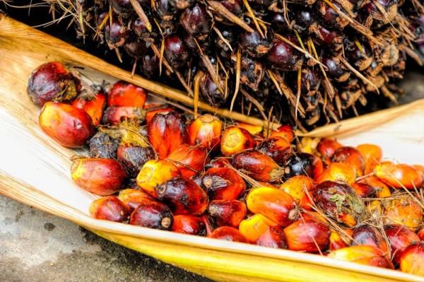 Tłuszcz palmowy – mity ifakty