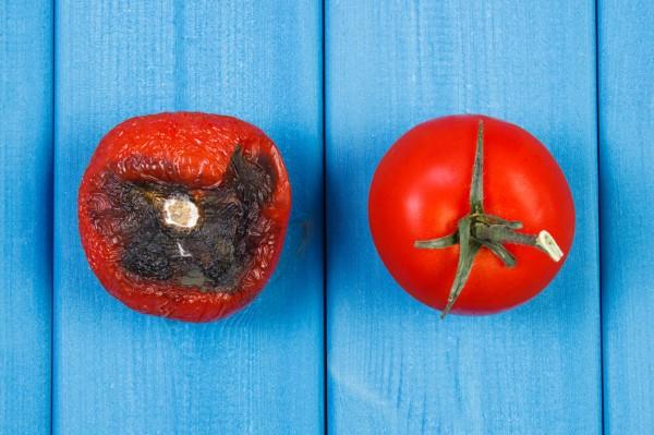 Mikrobiologiczne zagrożenia żywności